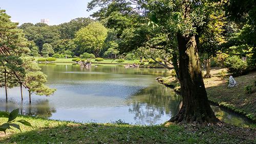 אמבט חום יפני אינאוסמוזיס